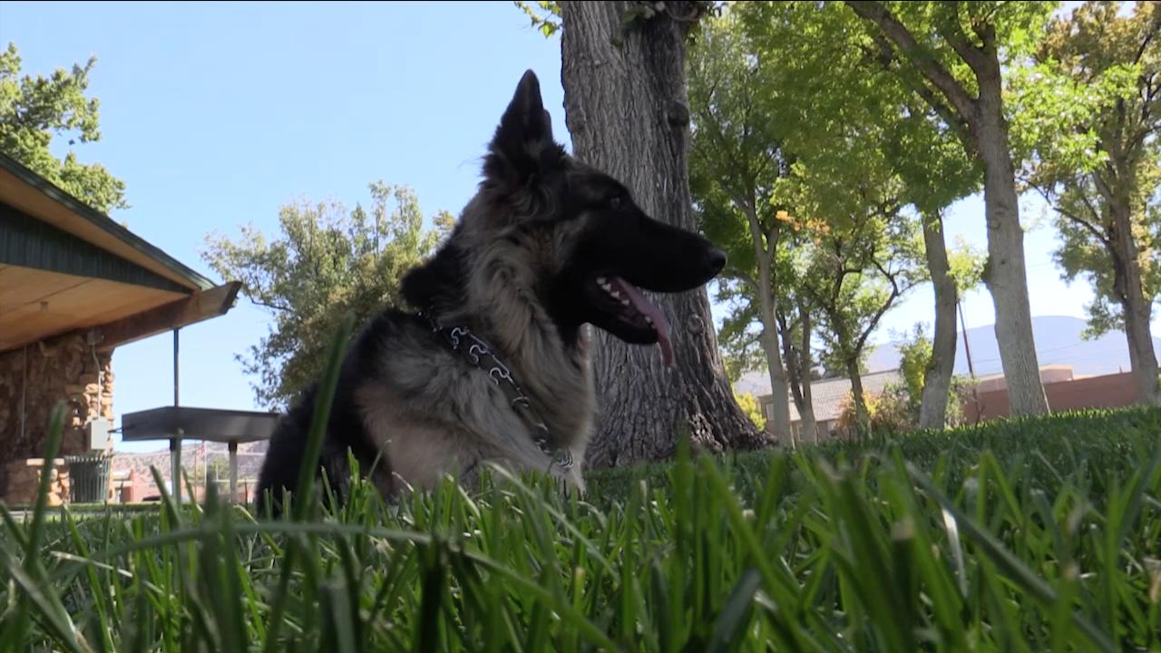Shari Swift talks to The Spectrum about taking her specially trained dogs Shasha and Shea down to Las Vegas after the shooting to help people struggling with PTSD, October 5, 2017.