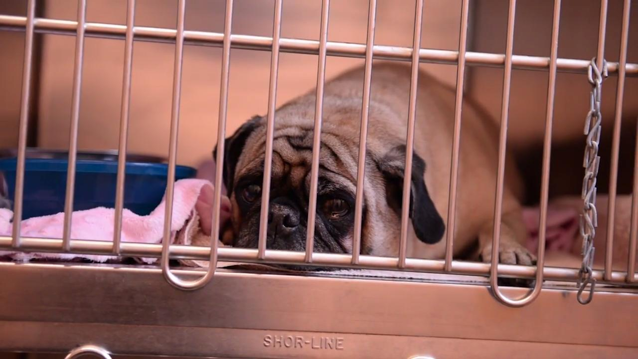 The proposed changes in Animal Control regulations – minus pet licensing – go before the Montgomery County Commission Monday night.