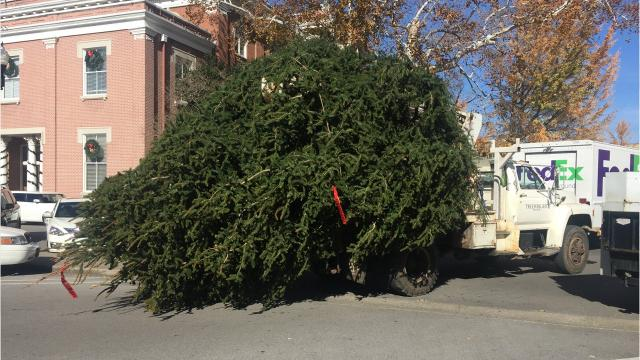 Crews install the Murfreesboro Christmas tree on Monday, Nov. 27, 2017
