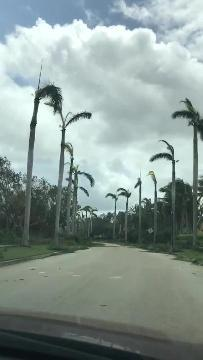 The aftermath of Hurricane Irma shows downed trees at Tiburón Golf Club in Naples. The video was filmed on Sept. 12, 2017. See more at www.facebook.com/tiburonnaples.