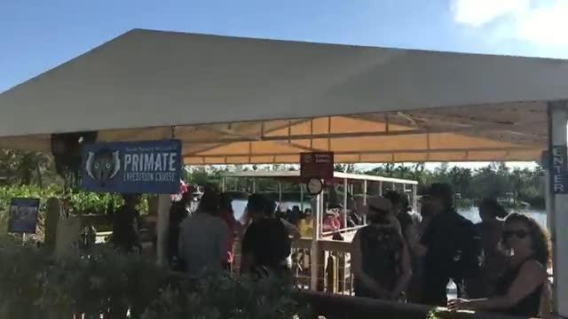 Video: Naples Zoo at Caribbean Gardens reopens