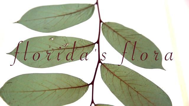 Video: Florida's Flora
