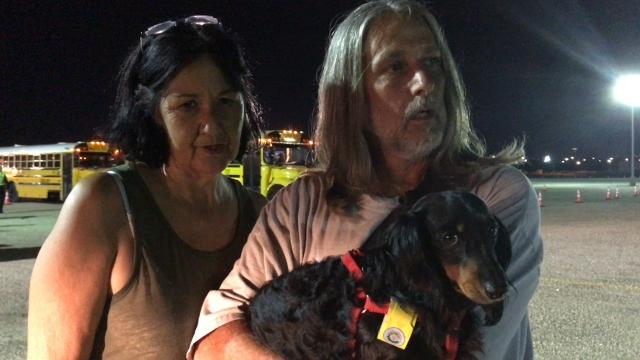 Evacuating with pets, what you need to know