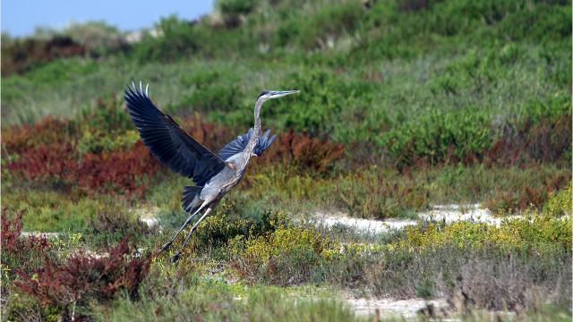 The Coastal Bend Bays & Estuaries Program receives a 17-acre tract near Packery Channel and plans to restore it to its natural condition.
