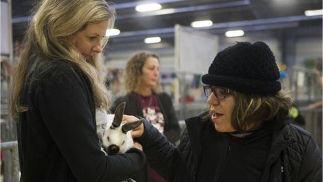 Seven Flour Bluff students with special needs were able to meet with exhibitors of the Nueces County Junior Livestock Show for some hands on time with their rabbits, goats, chickens and lambs at the Richard M. Borchard Fairgrounds Jan.19.