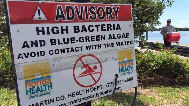 Even when Florida's waters are beautiful blue, dangers can lurk in the form of bacteria. Three are particularly troublesome, even deadly: Vibrio vulnificus, cyanobacteria (also known as blue-green algae) and enteric bacteria. TYLER TREADWAY/TCPALM
