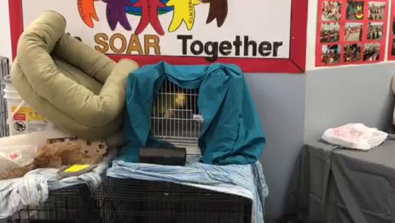 Video: Birds and cats In close quarters at pet-friendly shelter