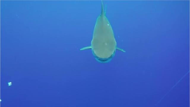 Video: What do you do if bitten by a shark?