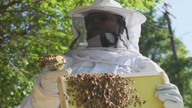 Detroit Hives helps guard the city's honeybees