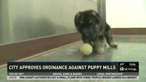 Phoenixs Attempt To Curb Puppy Mills Challenged
