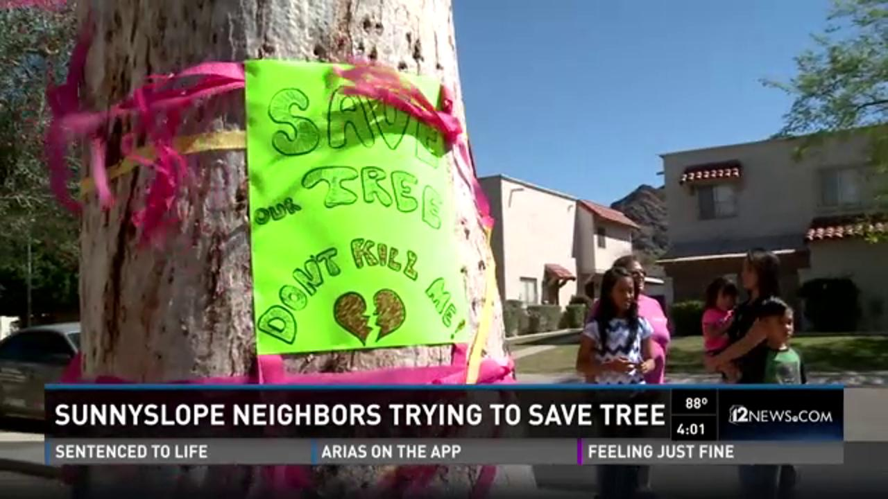 Sunnyslope neighbors trying to save a tree