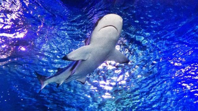 Take a peek into these metro Phoenix aquariums before you go