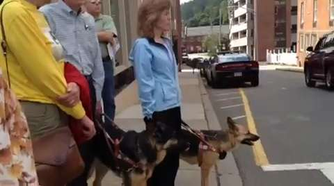 The Seeing Eye hosted a walk around Morristown. Sept. 23, 2014. STAFF VIDEO BY LESLIE RUSE