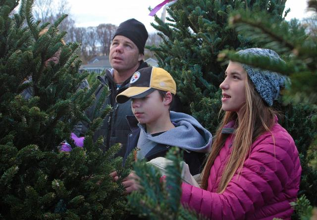 Lincroft Christmas Tree Farm offers tips on cutting your own tree