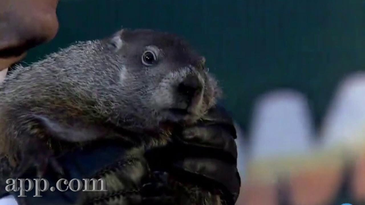 Groundhog Day Movie Quotes 5 Awesome Facts About Groundhog Day