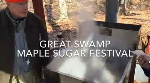 The Great Swamp  was swamped with people Saturday for its popular annual Maple Sugar Festival. IPHONE VIDEO BY WILLIAM WESTHOVEN MARCH 5, 2016