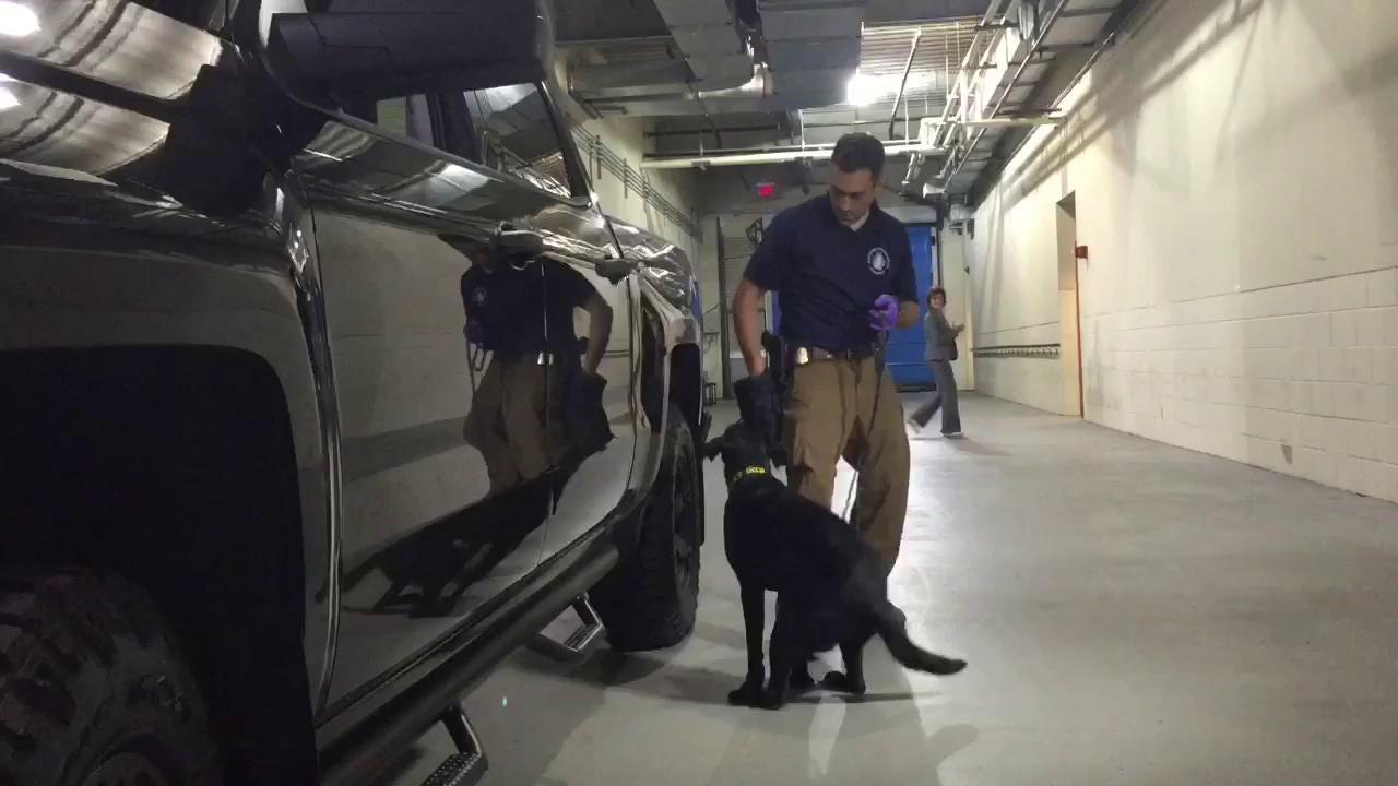 WATCH: Meet Iris the FBI dog