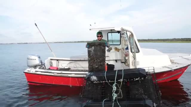 Matthew Gregg of Forty North Oyster Farms