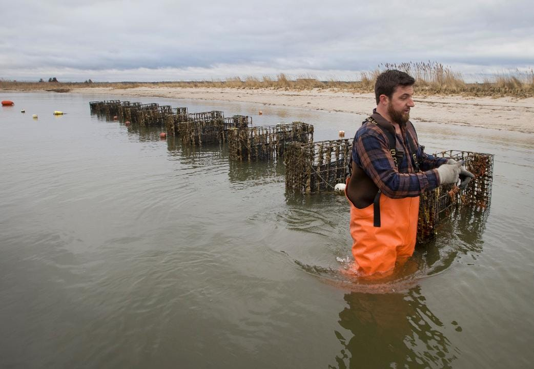 Oyster farmer finalist for APP Innovation Award