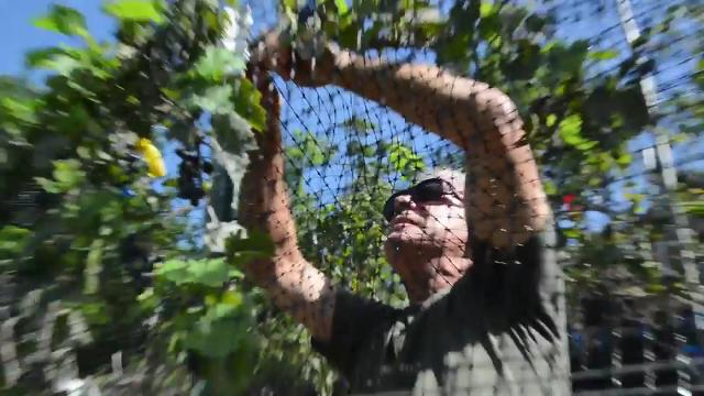 Tom Mincarelli has been making wine at his Broad River winery that placed well in the recent Asheville Food and Wine Festival. Now he's making wine with grapes he's grown himself.