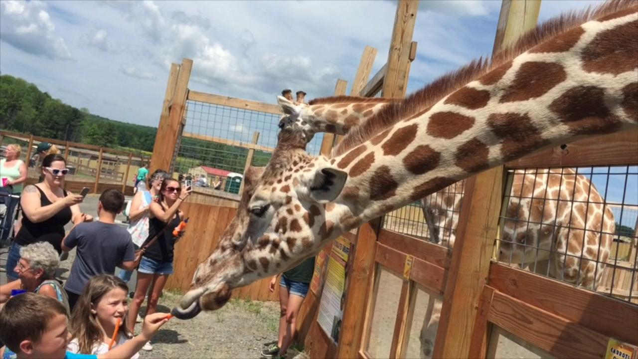 Opening day at Animal Adventures