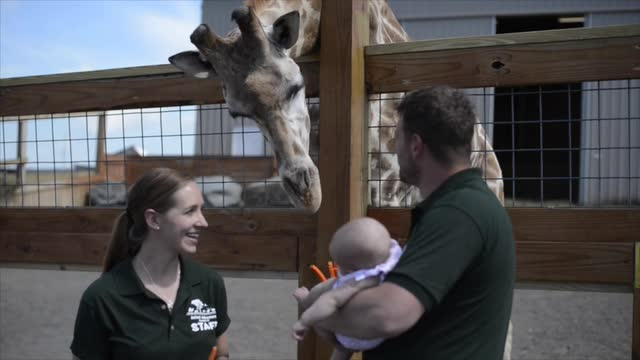 Video: Ava Patch feeds the giraffes for the first time