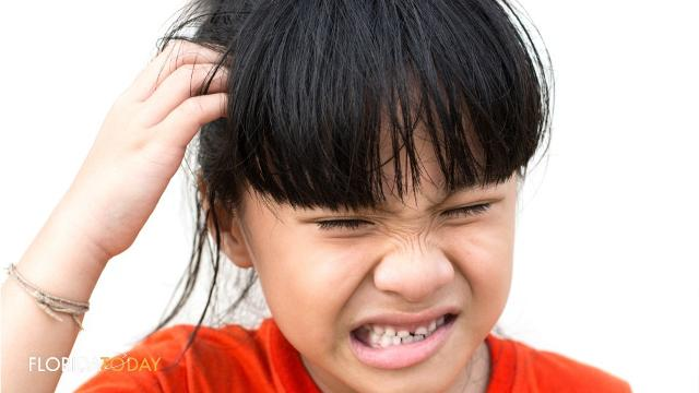 Lice In Florida Schools A Touchy Subject
