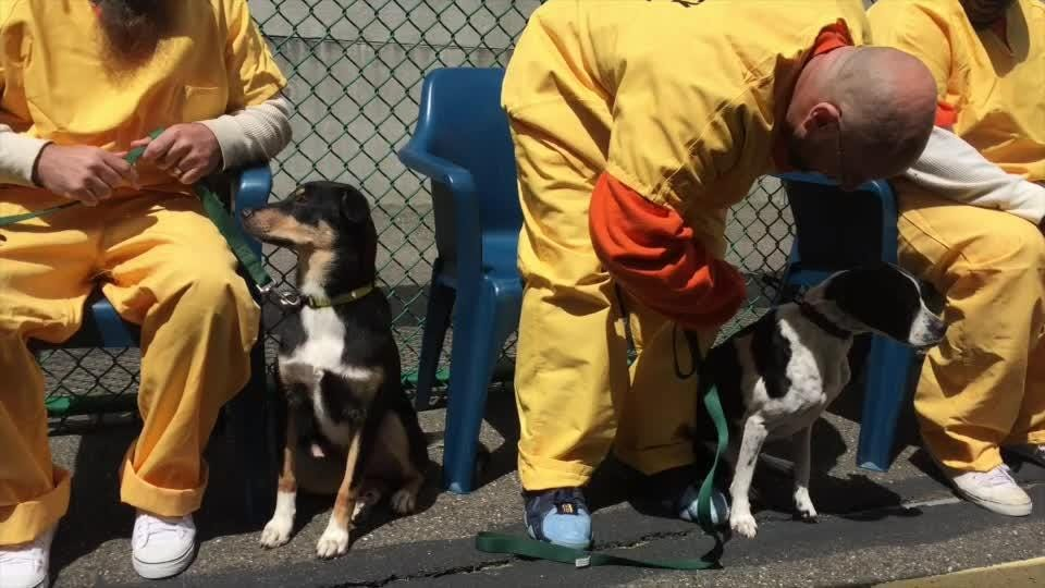 Camden Co. inmates to train dogs to work with veterans