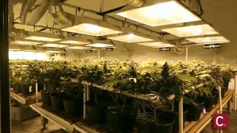Card denied: Marijuana advocacy group's bank account terminated