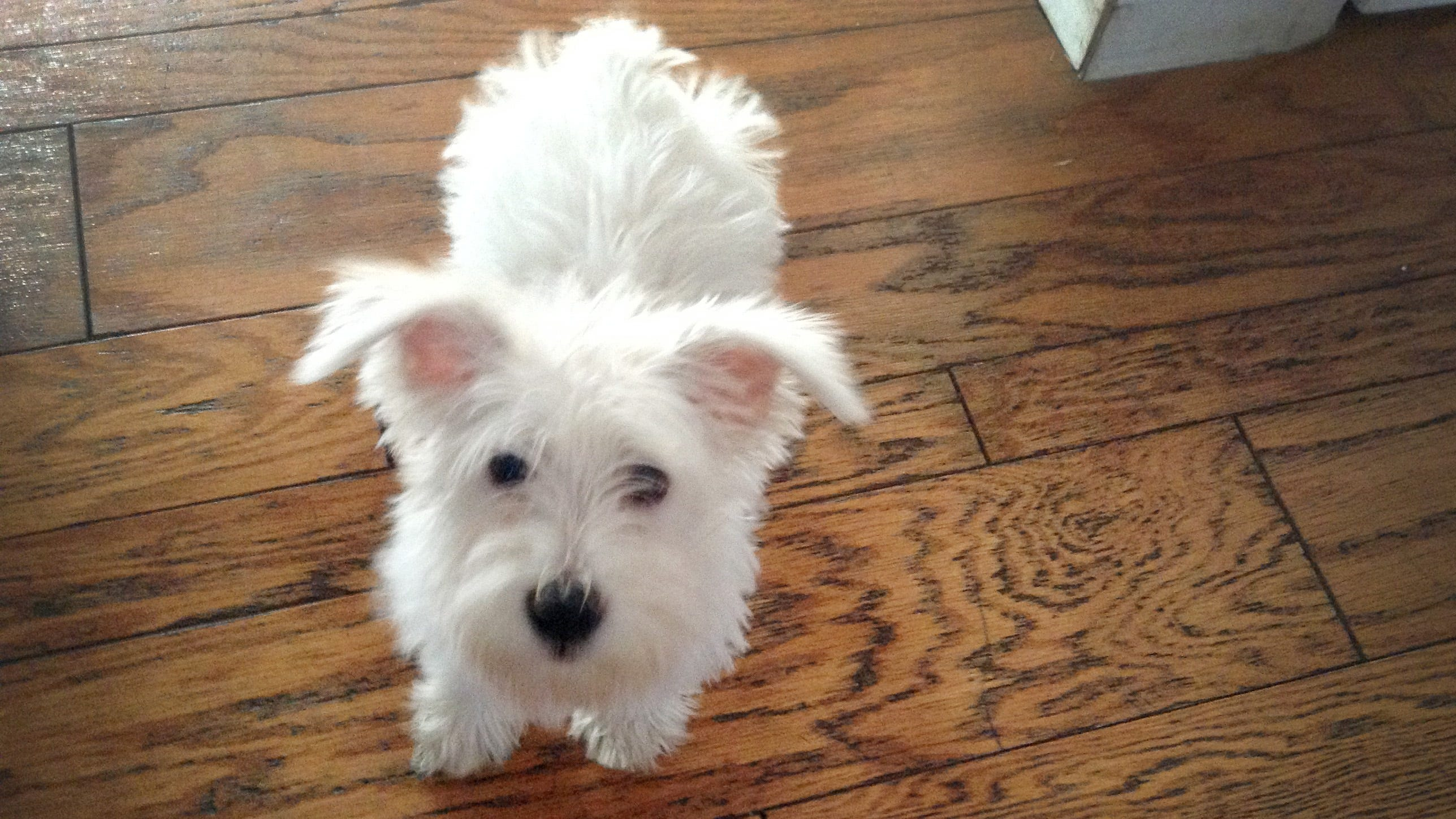 Family: Petland sold us a dying dog