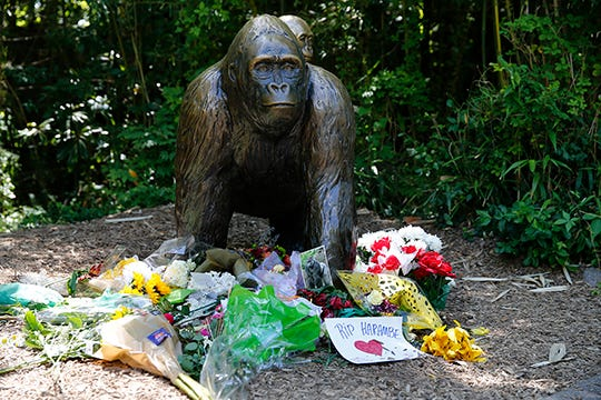 science offers future out of harambe s remains