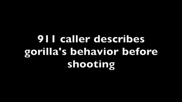 911 caller describes gorilla's behavior before shooting