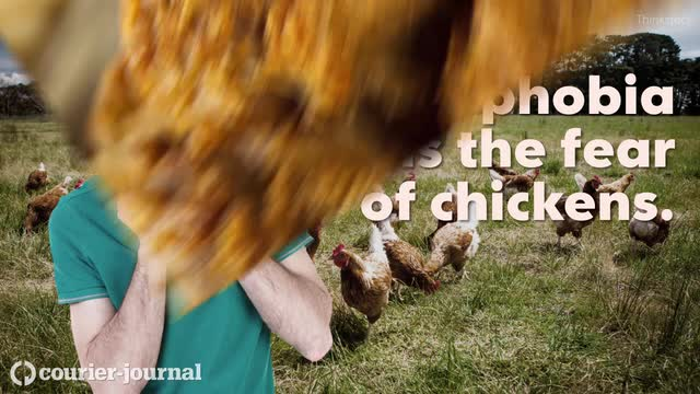 6 things to know about chicken