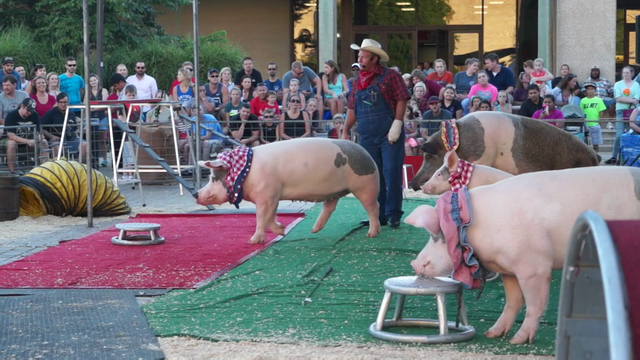 Pork Chop Revue at the Kentucky State Fair