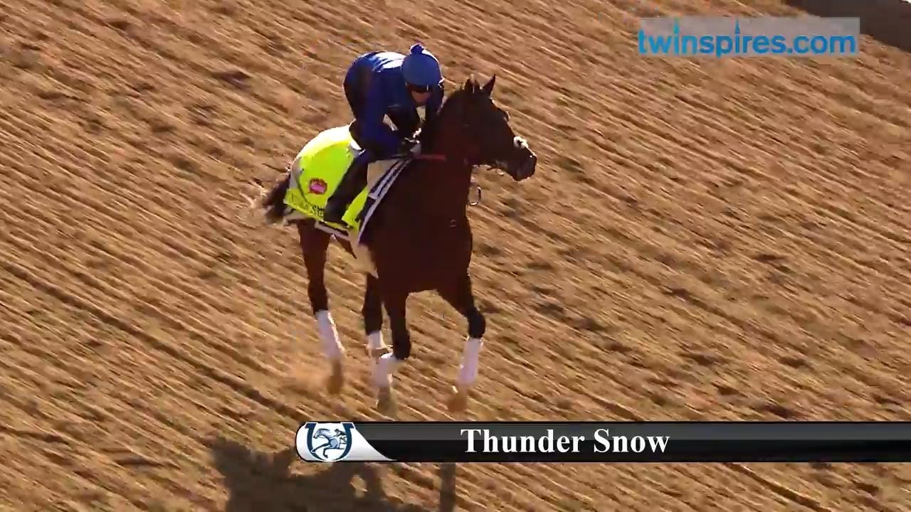 Kentucky Derby 2017 horses at Churchill | Thunder Snow