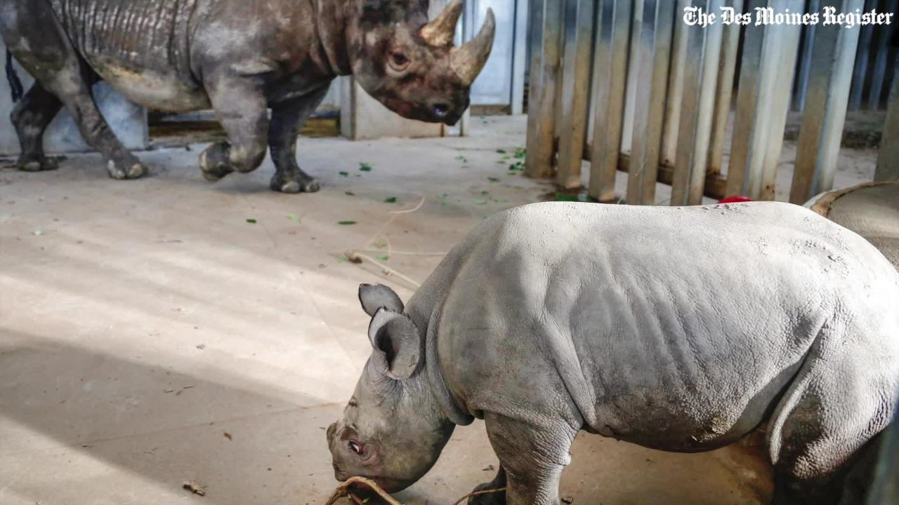 Remember that cute baby rhino? Now's your chance to name it