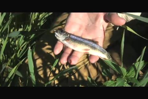 Brook trout fishing in northeast Iowa