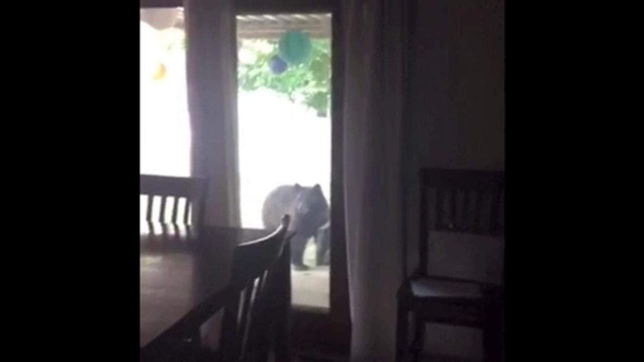 Bear spotted in Fort Collins backyard
