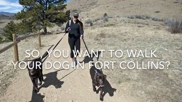 Where can I take my dog in Fort Collins?