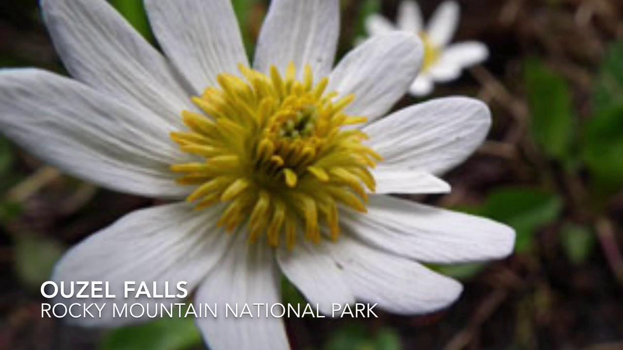 5 NoCo wildflower hikes