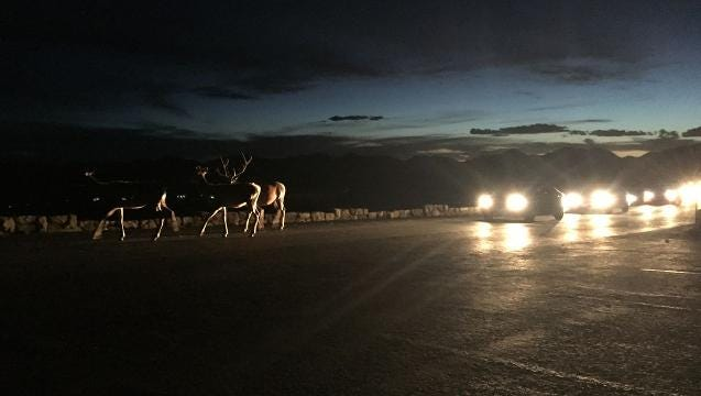 Elk cause night traffic jam on RMNP's Trail Ridge Road