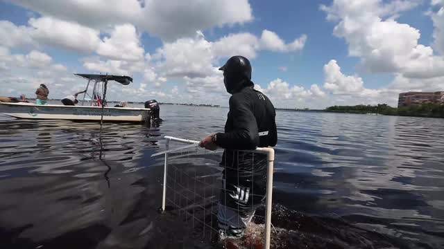 SCCF monitors health of grasses in Caloosahatchee River