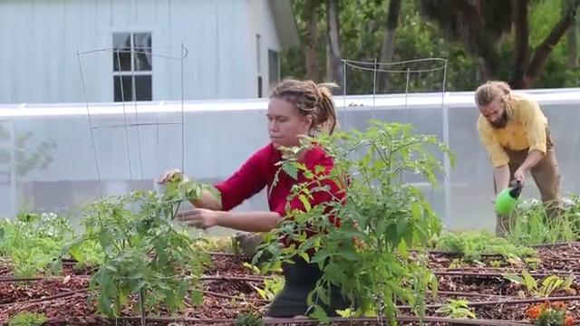 Edible Landscape: Organic Garden