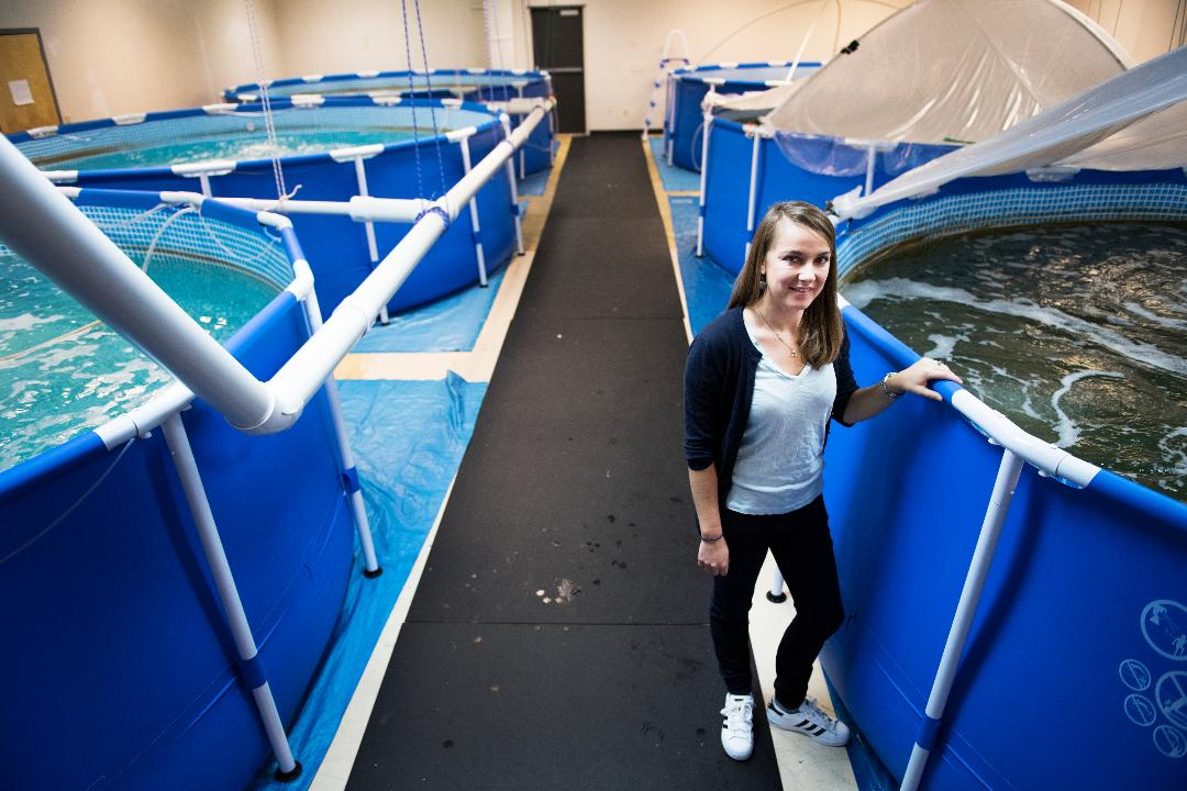 Woman starts Greenville's first shrimp farm