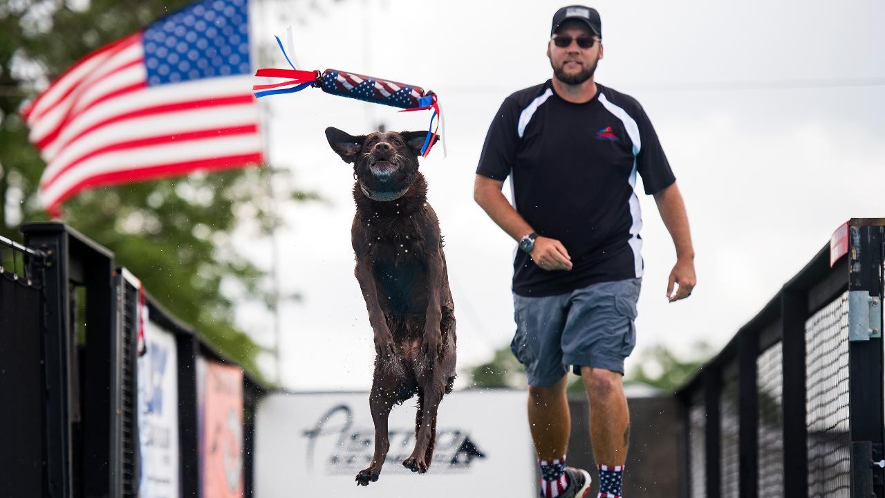 Watch dogs as they jump, swim and shake it off at the AKC Astro Kennels Blast Off 2017 North America Diving Dogs competition in Simpsonville.