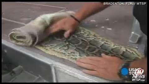 Hunter shows off python skins after snake challenge