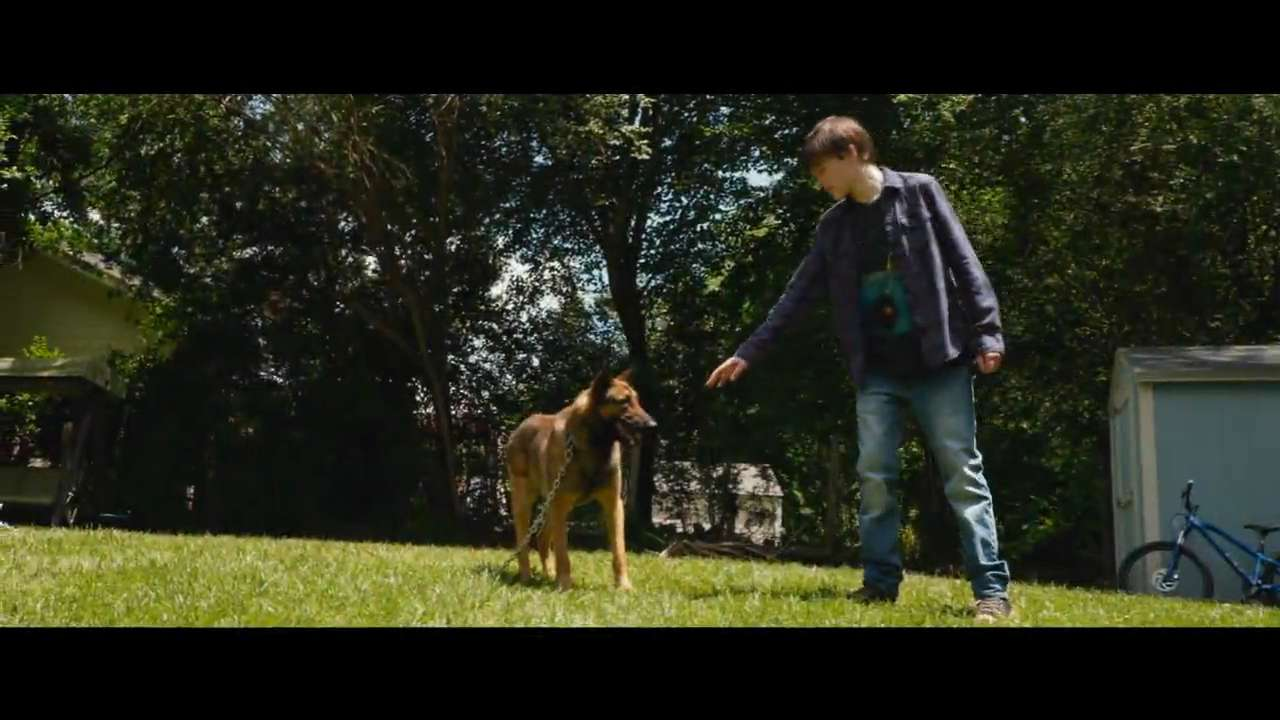 A boy adopts his dead brother's military service dog. Despite some initial hiccups, the two bond and work together to figure out what caused the fallen Marine's death.