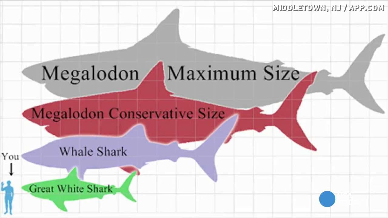 megalodon shark size - 1058×566