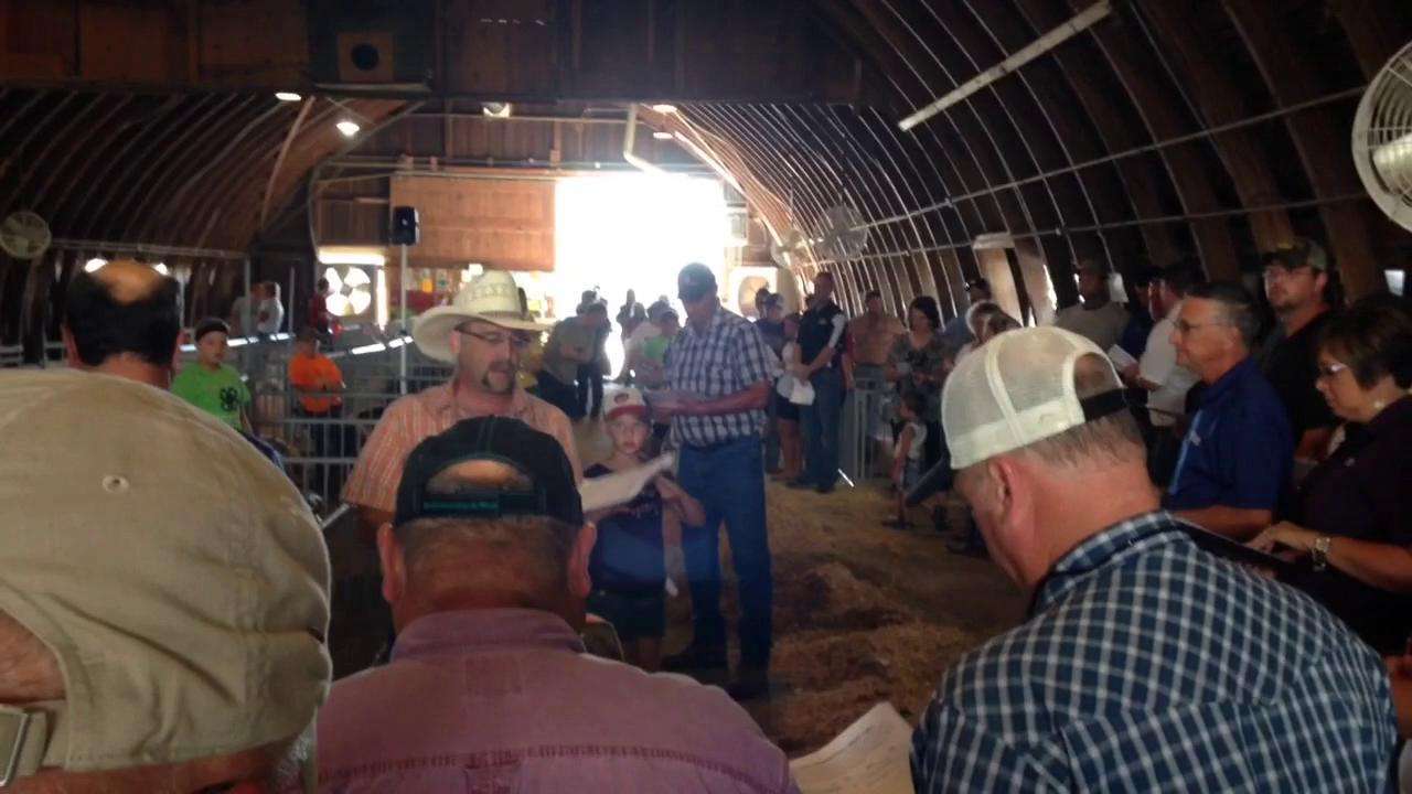 An auctioneer leads the bidding Friday for a market hog at the Johnson County Fair livestock auction.
