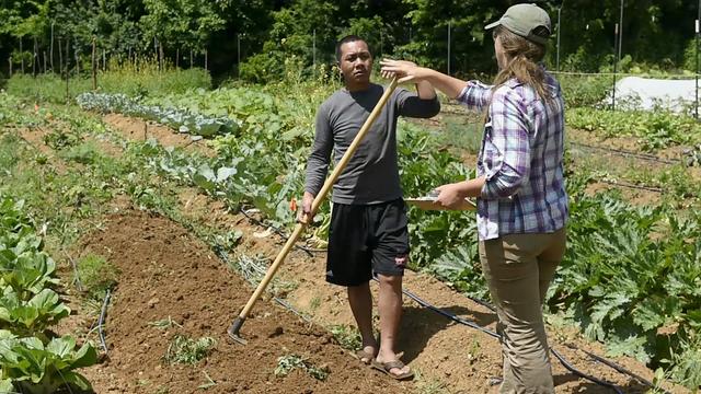 Nashville refugee farmers grow food for Bonnaroo